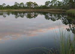 Turtle Creek Ln, Panacea