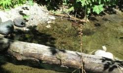 Tiller Trail Hwy, Days Creek
