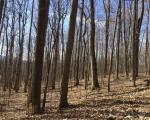 Big Tree Rd, Hemlock